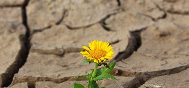 Resilience - Development